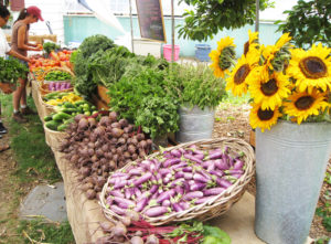Seasonal Farmstand @ Queens County Farm Museum | New York | United States