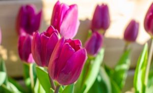 Floral Design: Tulips @ Queens Botanical Garden | New York | United States