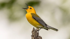 Bird Watching Tour at Strack Pond @ Forest Park Visitor Center | New York | New York | United States