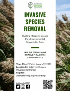 Invasive Species Removal with FMCP Environmental Stewardship @ Flushing Meadows Corona Park | New York | United States